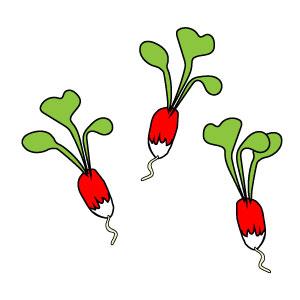 semer des radis : à table !