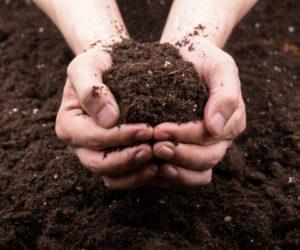 compost - Hortus Focus
