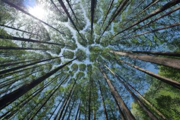 arbres - hortus focus