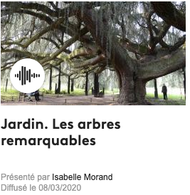 arbre remarquable