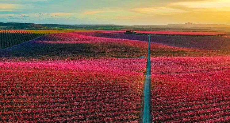 champs au printemps - Hortus Focus