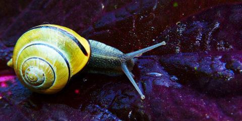 Escargot - Hortus Focus