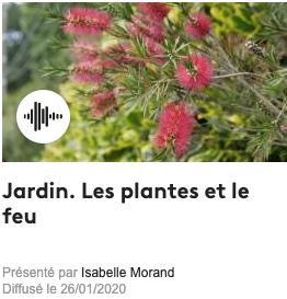 Les plantes et le feu
