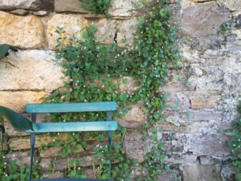 ruine de rome - hortus Focus