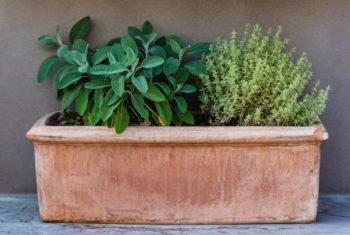 jardinière thym et sauge - Hortus Focus