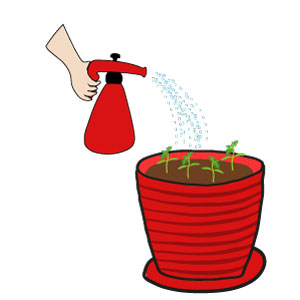 tomate cerise plant