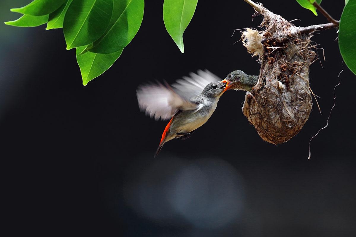oiseau nourrissage