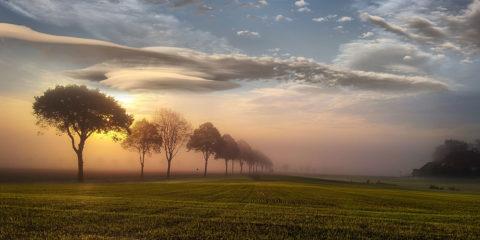 paysage printemps - hortus focus