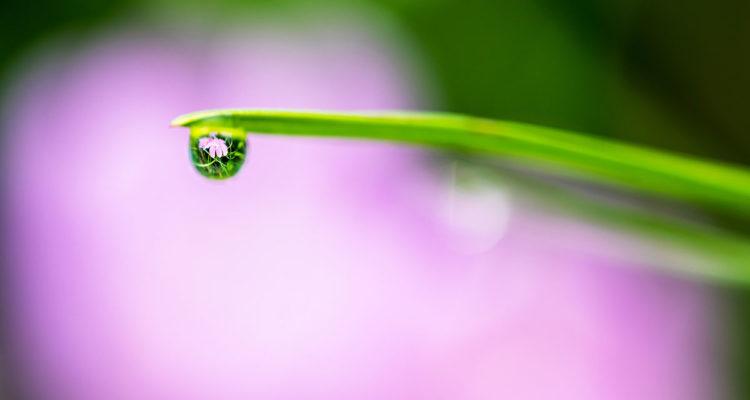 goutte d'eau - Hortus Focus