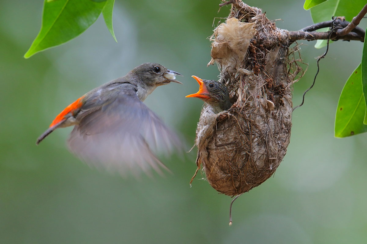 oiseau et oisillon