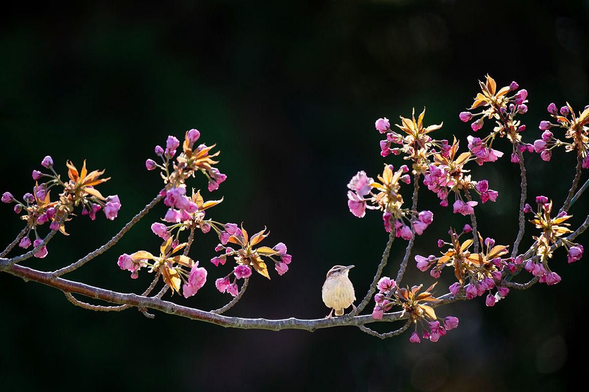 Oiseau sur branche - Hortus Focus