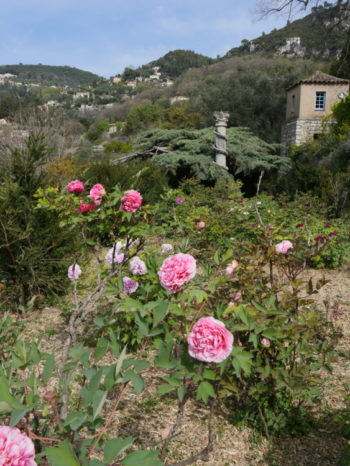 Jardins de la Villa Noailles - Hortus Focus