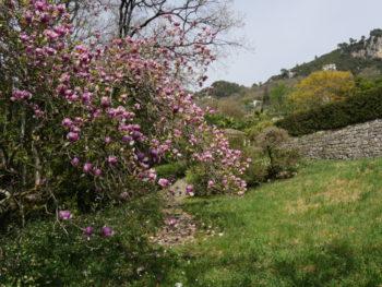 Jardin de la Villa Noailles - Hortus Focus