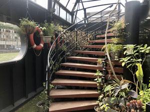 Librairie l'eau et les rêves - escalier et plantes