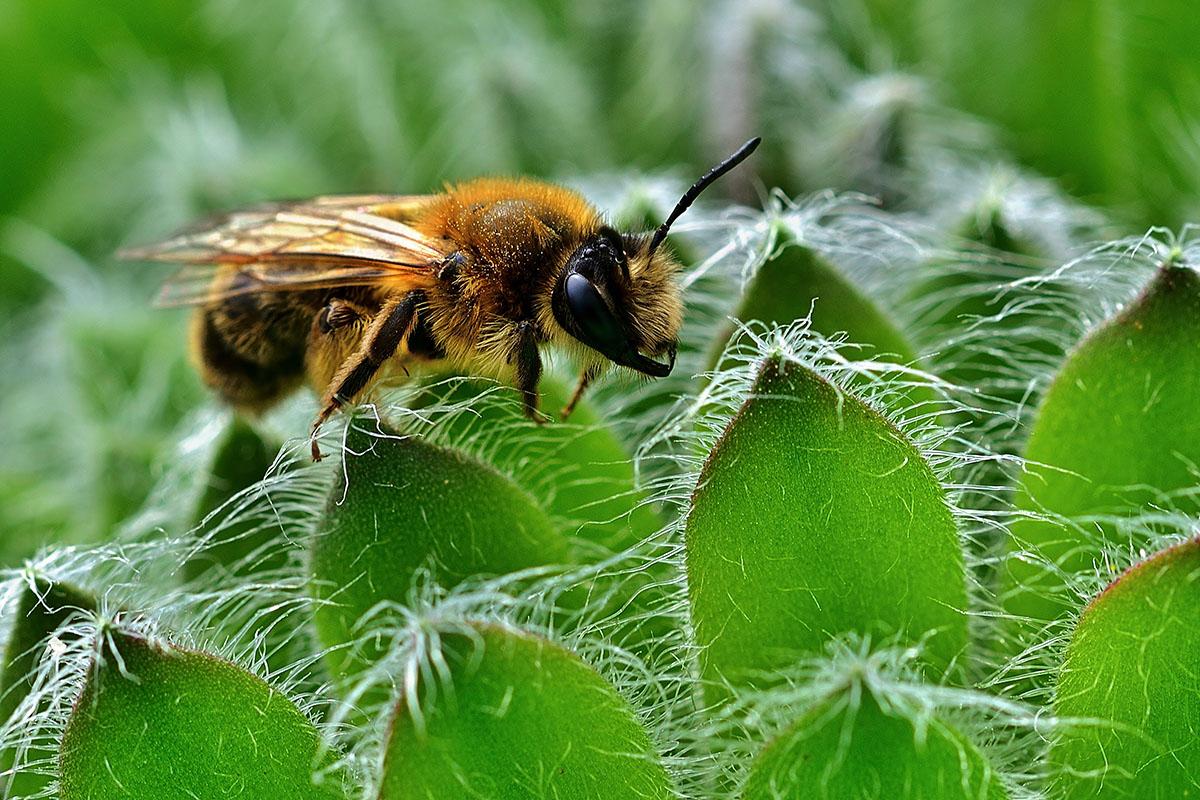 insecte sur succulente