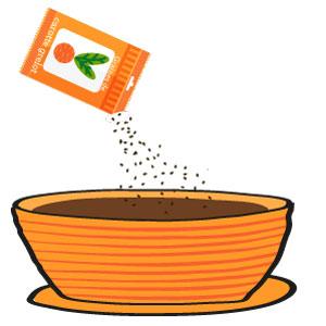 carottes grelot - le semis