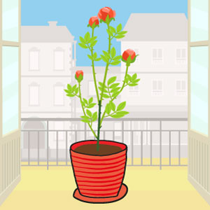 la rose - les fleurs