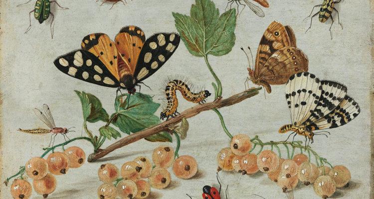 tableau nature - Hortus Focus
