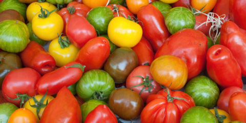Tomates en collection - Hortus Focus