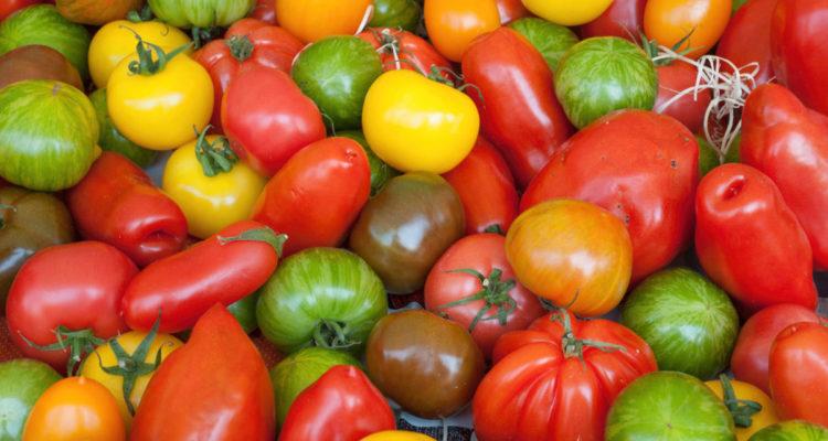 Tomates en collection - Hortus Focus