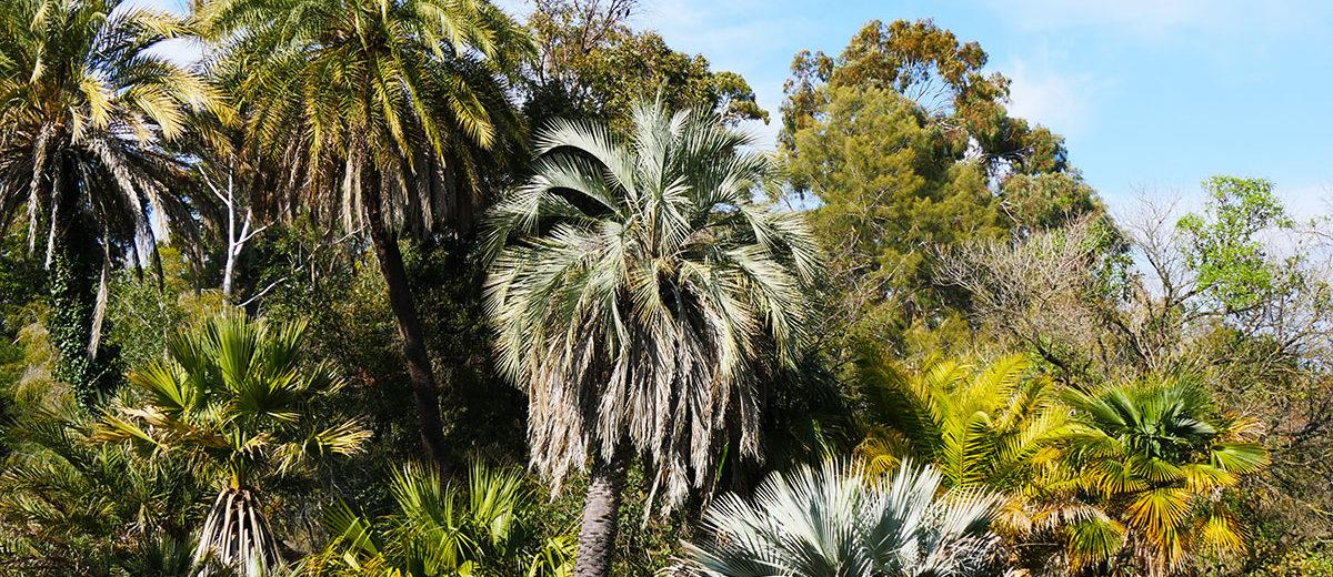 Jardin Thuret - Hortus Focus