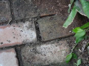 Sol brique - Hortus Focus