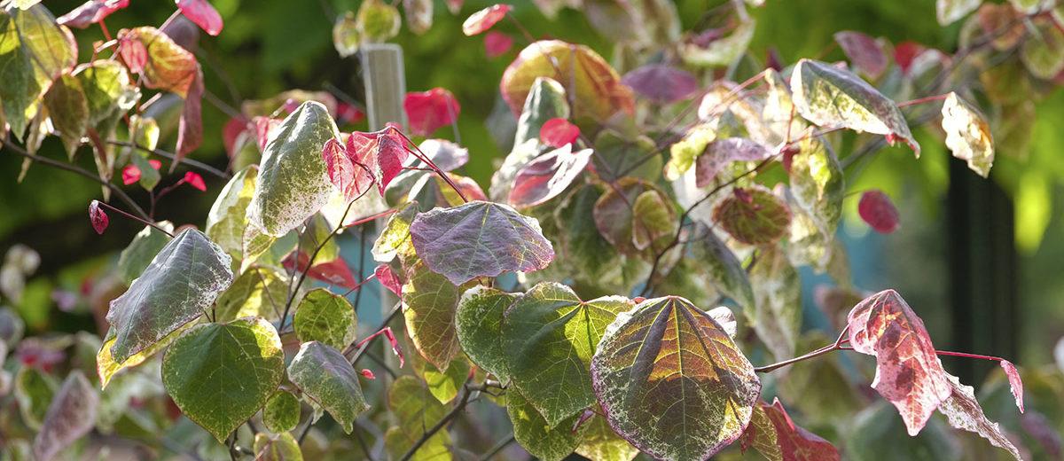 Le Jardin des Vieilles Vignes - Hortus Focus