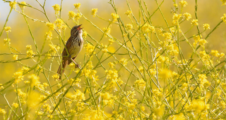 oiseau dans champ - Hortus Focus