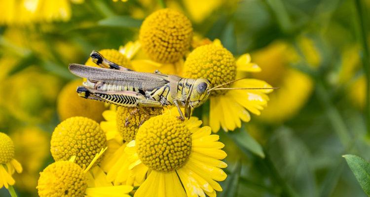 insecte dans fleur - Hortus Focus