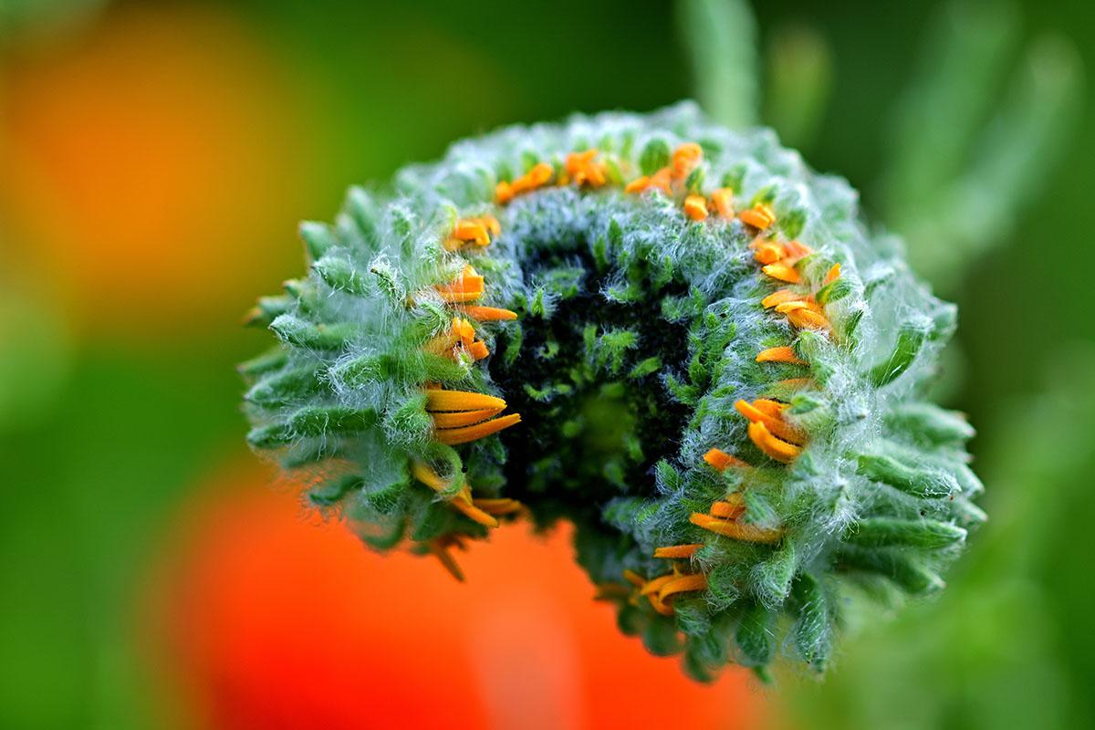 fleur en macro - Hortus Focus