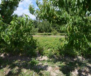 Agroforesterie : La ferme pilote de La Durette