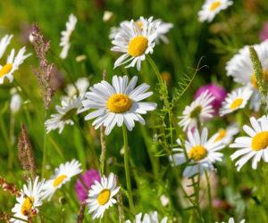 fleurs d'été - Hortus Focus
