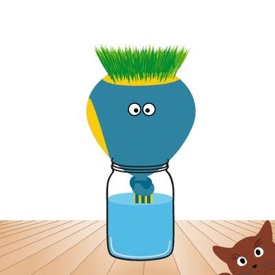 faire pousser ton herbe à chat : ça pousse