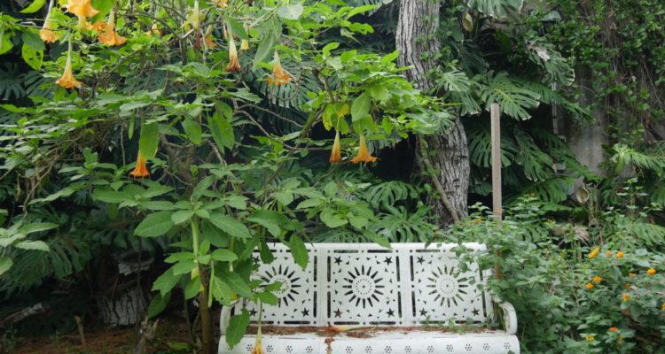 Villa Pennisi - Brugmansia - Hortus Focus