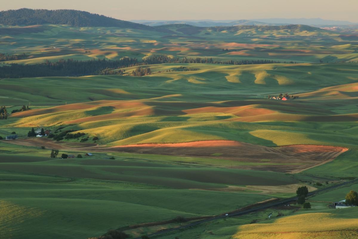 champs et soleil - Hortus Focus