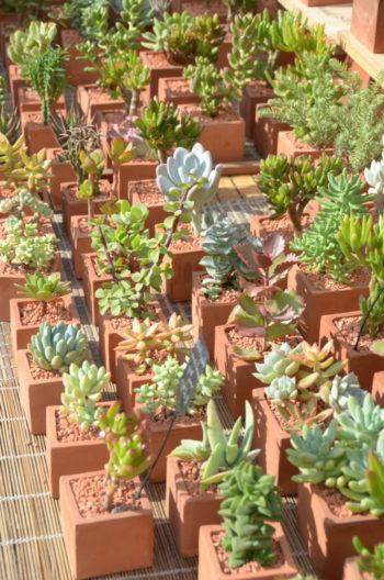 succulentes - Hortus Focus