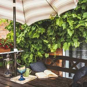 Vigne terrasse