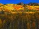 forêt en automne - Hortus Focus