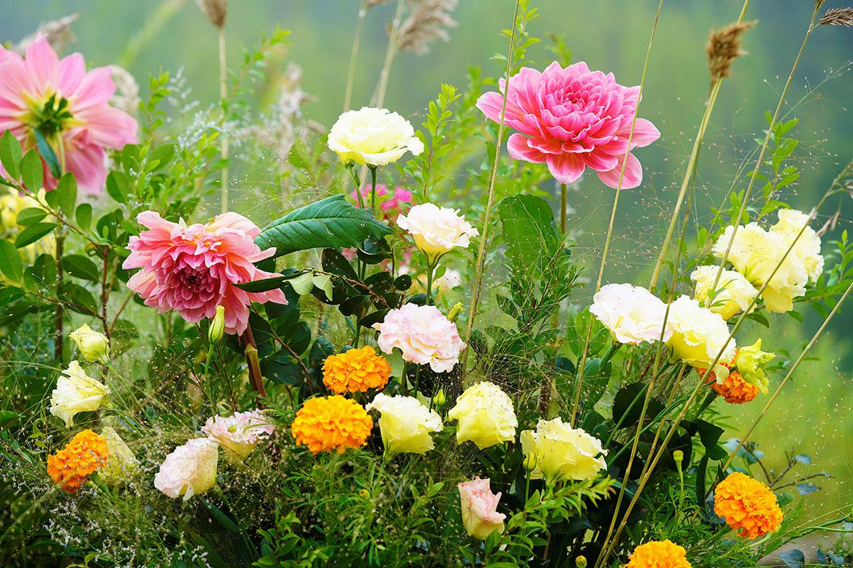 bouquet fin d'été - Hortus Focus