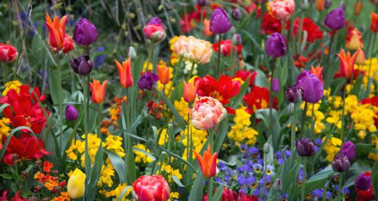 Fleurs de printemps - Hortus Focus