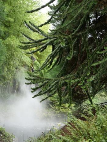 Terra Botanica - Hortus Focus