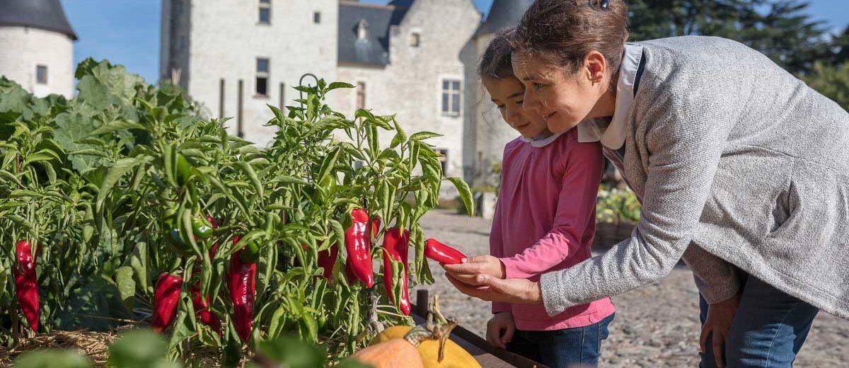 Chateau du Rivau : découverte