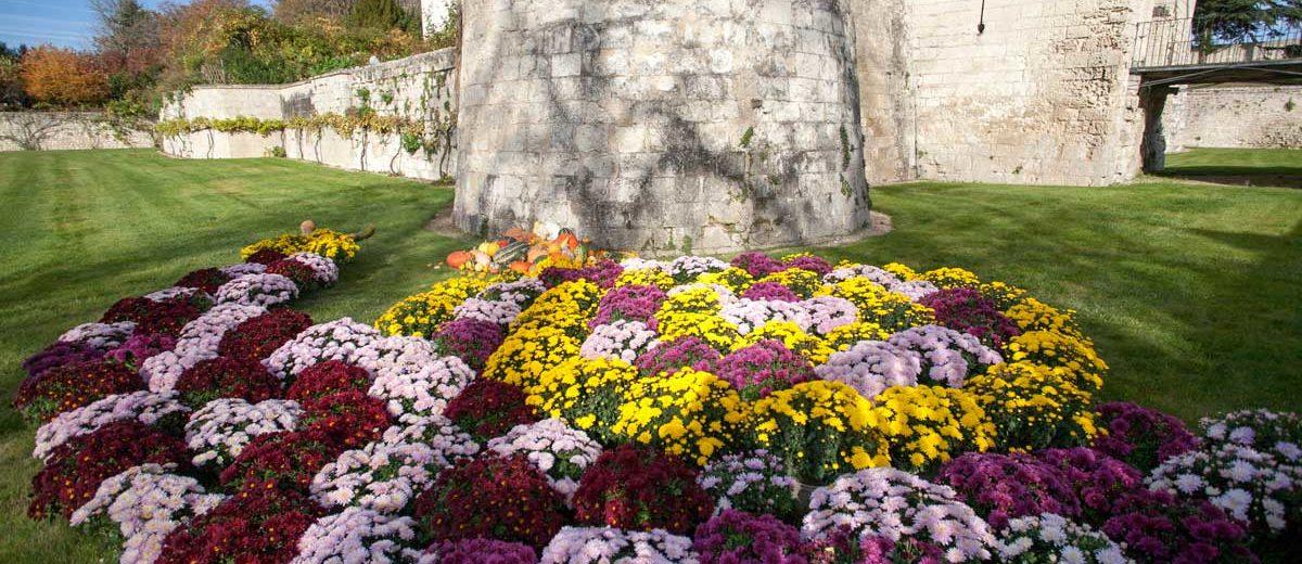 Chateau du Rivau : automne - Chrysanthèmes