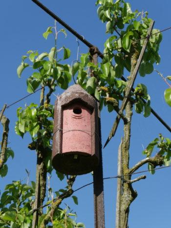 nichoir dans arbre fruitier - Hortus Focus
