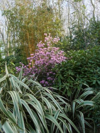 Le jardin de Pellinec - Hortus Focus