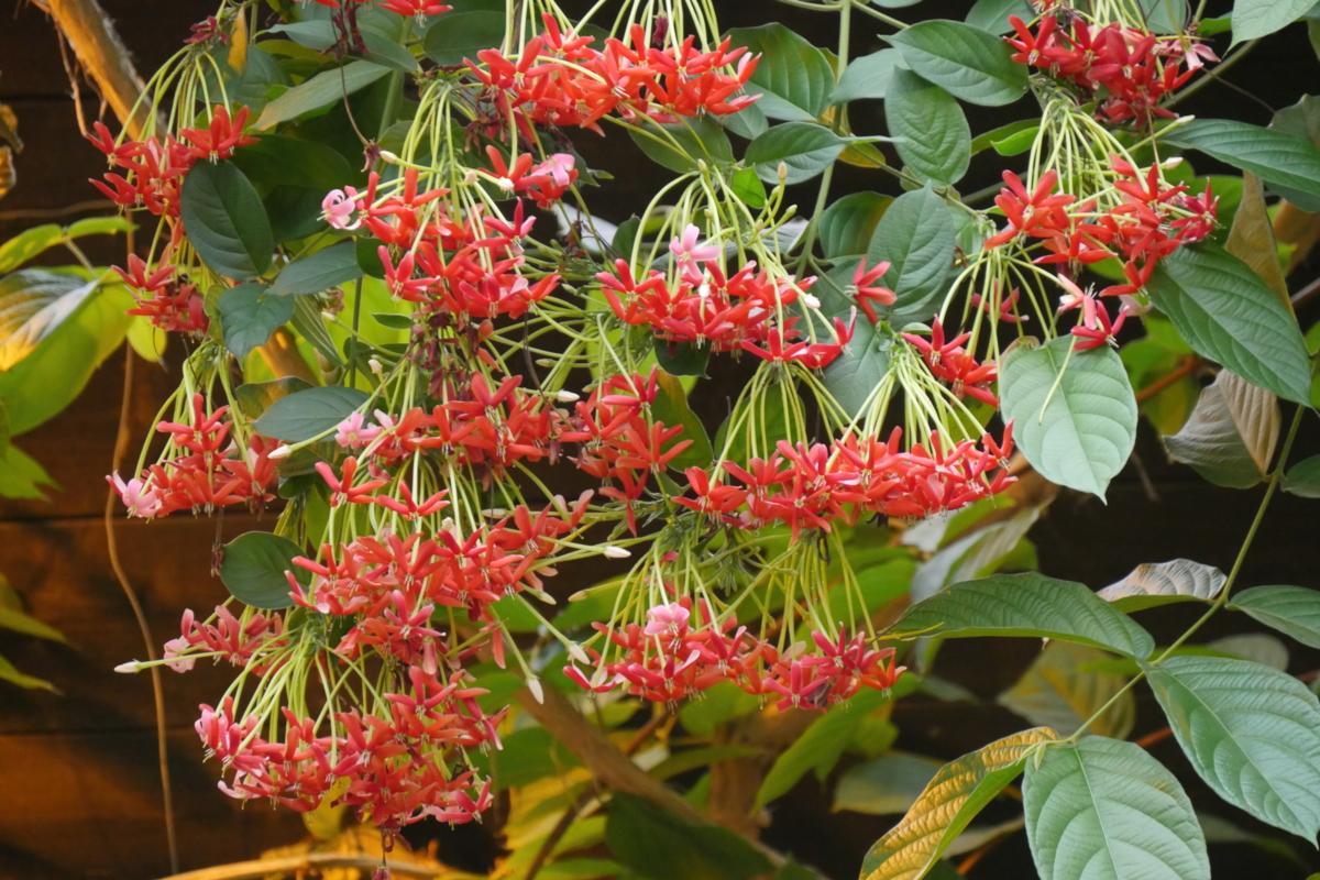 Fleur exotique rouge - Hortus Focus