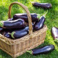 aubergine : panier