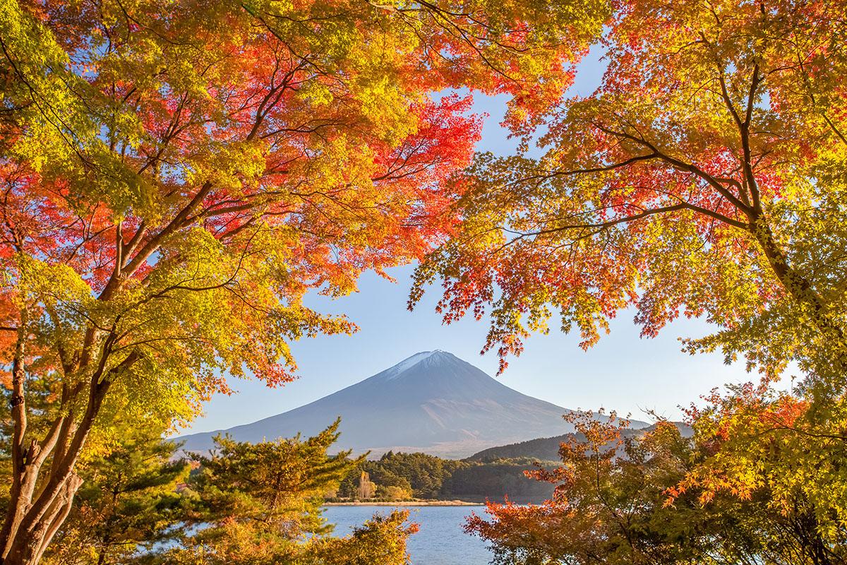 automne sur fujiyama - Hortus Focus