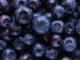 myrtille - Hortus Focus