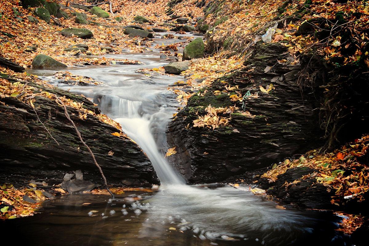 ruisseau en automne - Hortus Focus